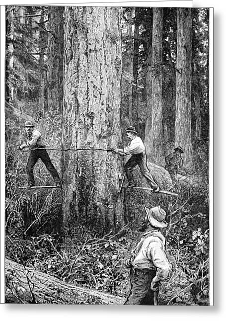 Human Tree Greeting Cards - Plantation Forestry, 19th Century Greeting Card by