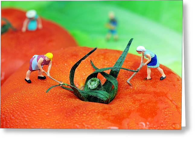 Planting On Tomato Field Greeting Card by Paul Ge