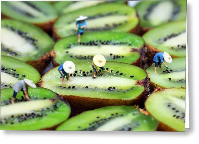 Kiwifruit Greeting Cards - Planting rice on kiwifruit Greeting Card by Paul Ge