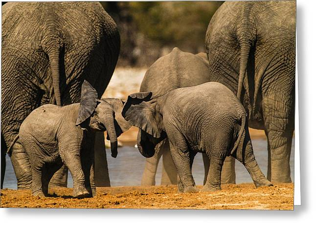 Elephants Pyrography Greeting Cards - Play 5 Greeting Card by Alistair Lyne