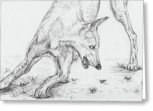 Rescued Greyhound Greeting Cards - Play Ii Greeting Card by Teresa Vecere