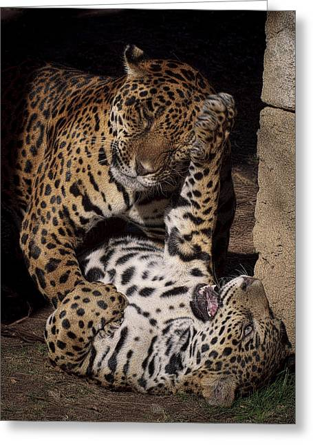 Jaguars Greeting Cards - Play Time Greeting Card by Cheri McEachin