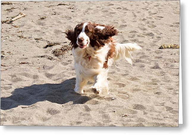 Dog Beach Card Greeting Cards - Play Time On Marrowstone Island Greeting Card by Marie Jamieson