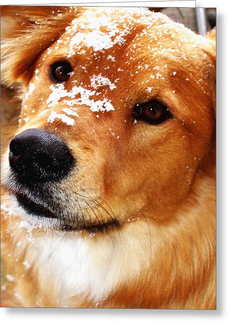 Doggy Cards Greeting Cards - Play with Me Greeting Card by Irma BACKELANT GALLERIES