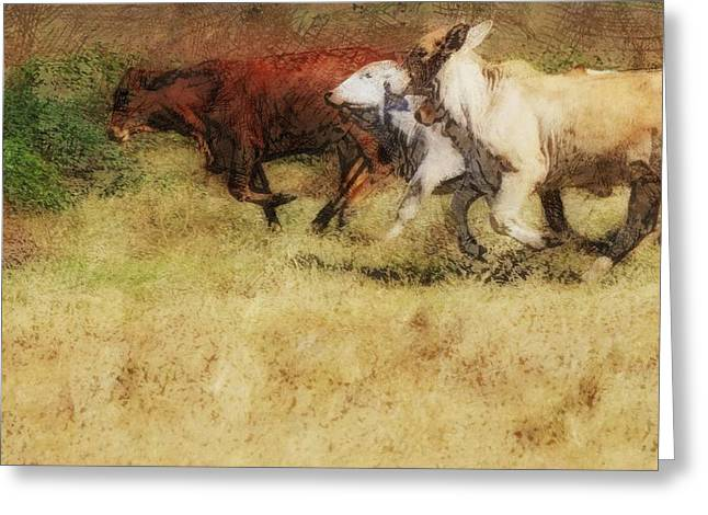 Playful Greeting Cards - Playful Brahman Cattle Greeting Card by Douglas Barnard