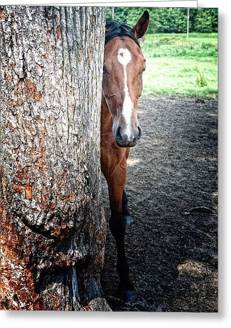 Pastureland Greeting Cards - Playing hide and seek Greeting Card by Marta Holka