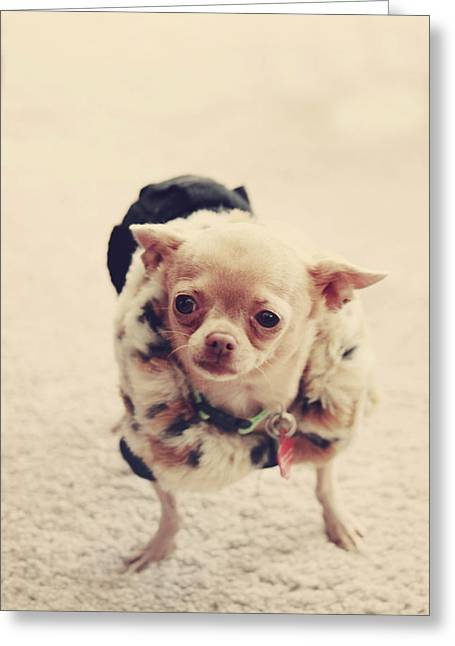 Tiny Dogs Greeting Cards - Please Meet Zoe Greeting Card by Laurie Search