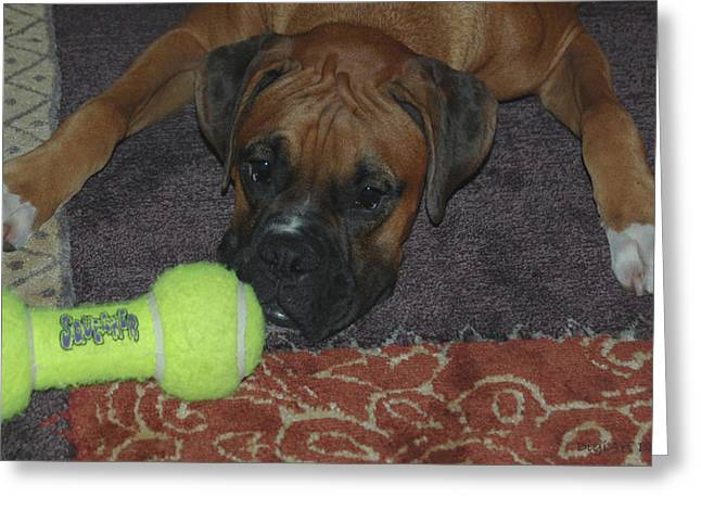 Fawn Boxer Greeting Cards - Please Play With Me Greeting Card by DigiArt Diaries by Vicky B Fuller
