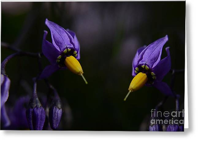 pleasures of purple Greeting Card by The Stone Age