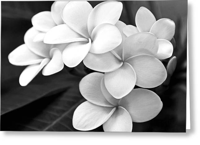 Fine Art Flower Photography Greeting Cards - Plumeria - Black and White Greeting Card by Kerri Ligatich