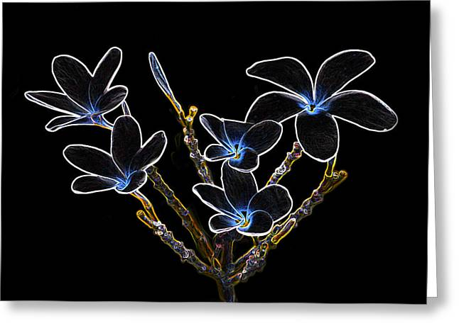 Digital Altered Greeting Cards - Plumeria outlines B7072 Greeting Card by Michael Peychich