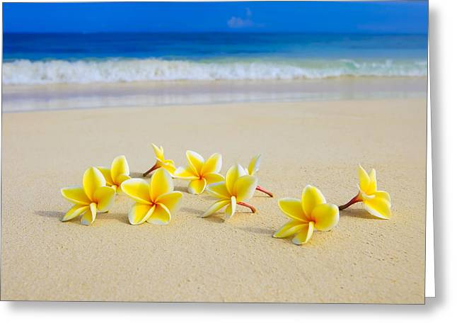 Recently Sold -  - Flower Design Greeting Cards - Plumerias on Beach II Greeting Card by Tomas del Amo
