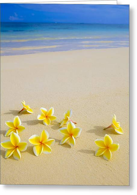 Recently Sold -  - Flower Design Greeting Cards - Plumerias on Beach Greeting Card by Tomas del Amo