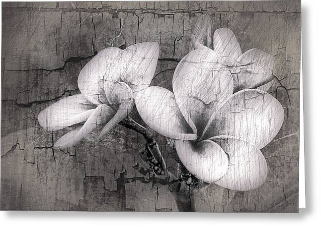 Hawii Greeting Cards - Plumiera in Black and White Greeting Card by James Steele