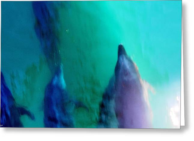 Sea Of Cortez Greeting Cards - Pod of Dolphins Greeting Card by Russ Harris