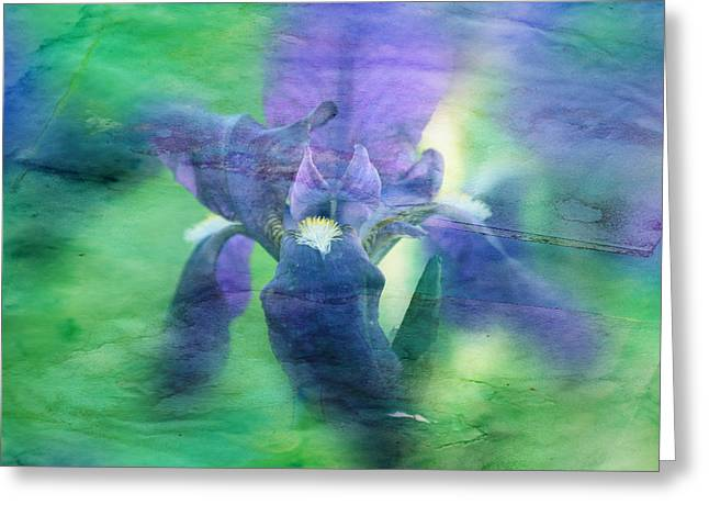 Floral Photographs Greeting Cards - Poetic Iris 2 Greeting Card by Toni Hopper