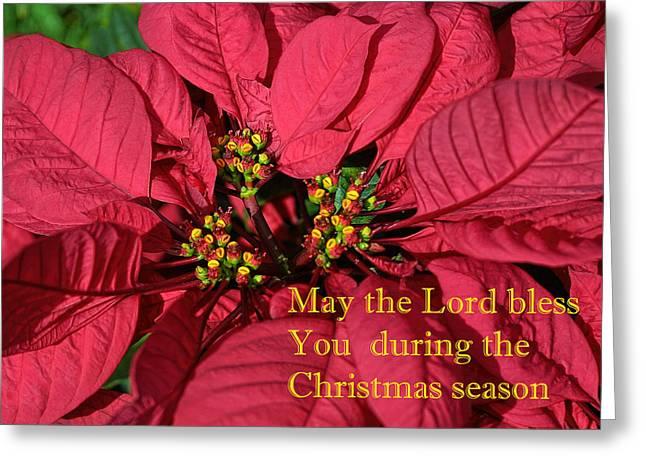 Christmas Greeting Photographs Greeting Cards - Poinsetta for Christmas Greeting Card by Linda Phelps
