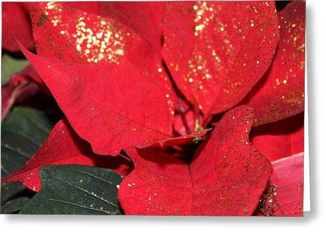 Shiny Pyrography Greeting Cards - Poinsettia Greeting Card by Christopher Braim
