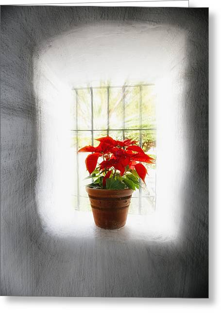 Adobe Greeting Cards - Poinsettia in Window light Greeting Card by George Oze