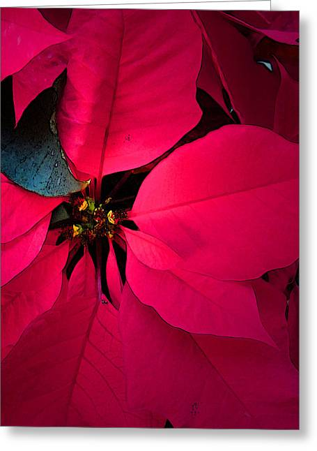 Digital Manipulation Art Greeting Cards - Poinsettia Greeting Card by Pat Exum