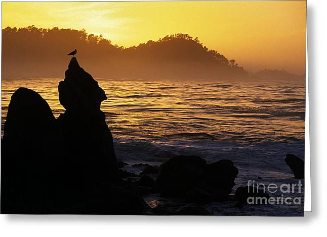 Point Lobos State Greeting Cards - Point-lobos-20-4 Greeting Card by Craig Lovell