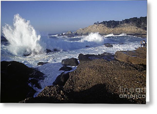 Point Lobos Greeting Cards - Point-lobos-8-19 Greeting Card by Craig Lovell