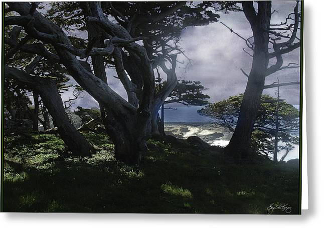 Point Lobos Greeting Cards - Point Lobos Cypress Grove Greeting Card by Wayne King
