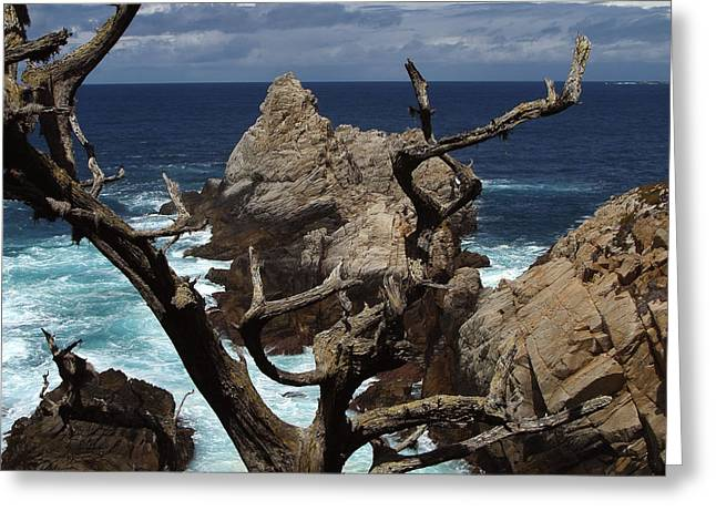 Big Sur Beach Greeting Cards - Point Lobos Rocks and Branches Greeting Card by Charlene Mitchell
