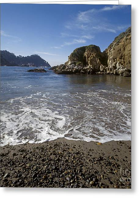 Point Lobos State Greeting Cards - Point-lobos-t3-3 Greeting Card by Craig Lovell