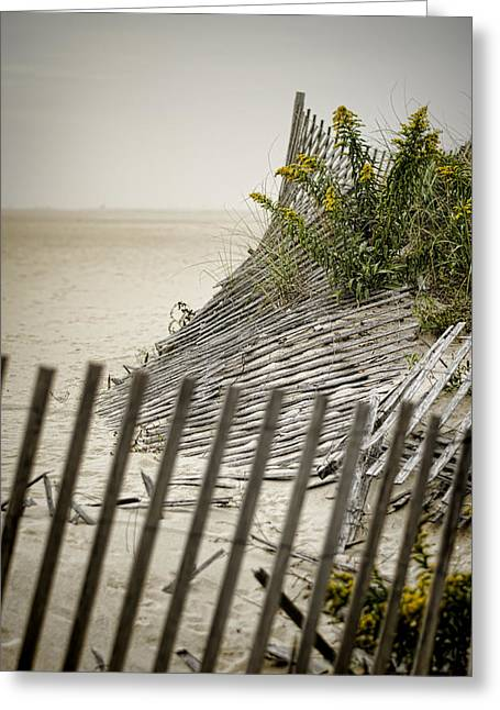Weed Line Greeting Cards - Point Pleasant Beach Greeting Card by Heather Applegate