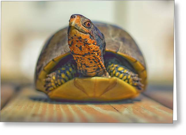 Turtle Shell Greeting Cards - Pokin Out Greeting Card by Bill Tiepelman