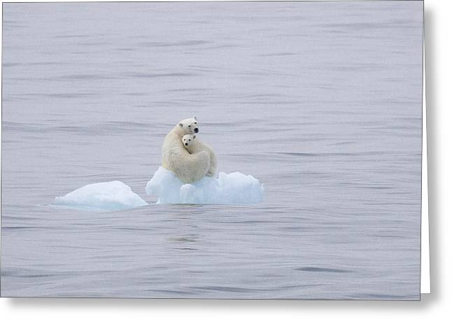Arm Around Greeting Cards - Polar Bear And Cub On A Floating Chunk Greeting Card by Ira Meyer
