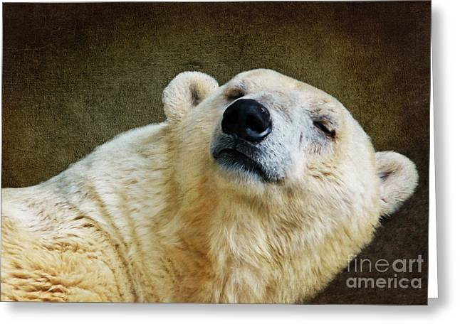 Polar Bears Greeting Cards - Polar Bear Greeting Card by Angela Doelling AD DESIGN Photo and PhotoArt