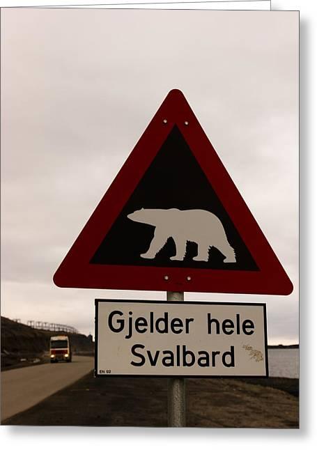 Svalbard Greeting Cards - Polar Bear Crossing Sign In Svalbard Greeting Card by Norbert Rosing