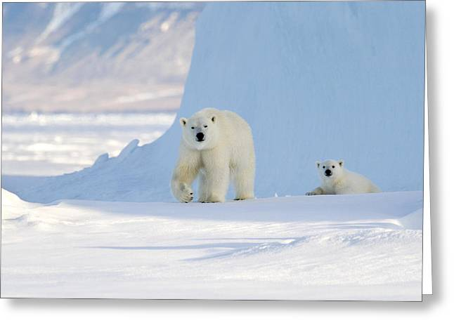 Ursus Maritimus Greeting Cards - Polar Bear Mother And Cub Greeting Card by Louise Murray