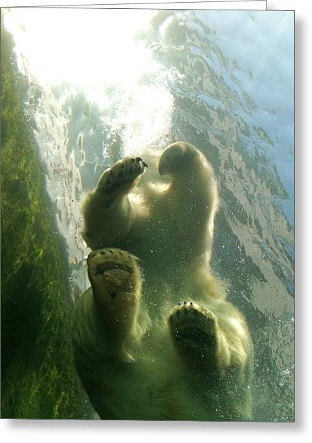 Polar Plunge Greeting Cards - Polar Bear Plunge Greeting Card by Jennifer Anderson