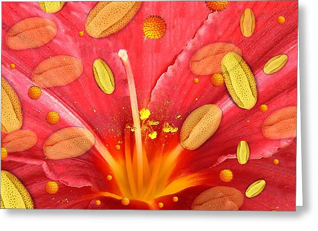 Pollen And Flower Greeting Card by Hannah Gal