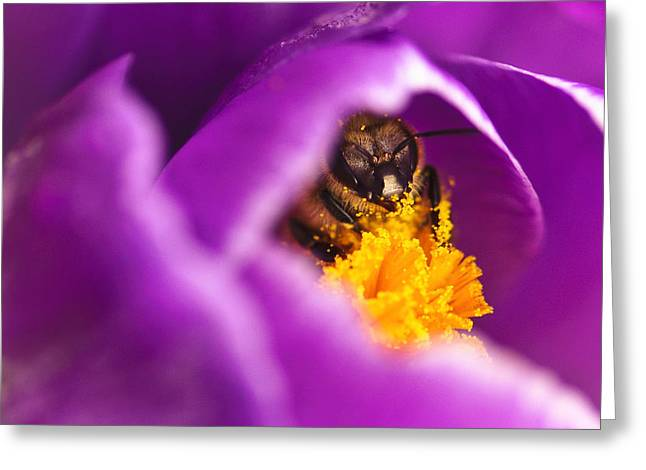 Pollination Party of One Greeting Card by Vicki Jauron