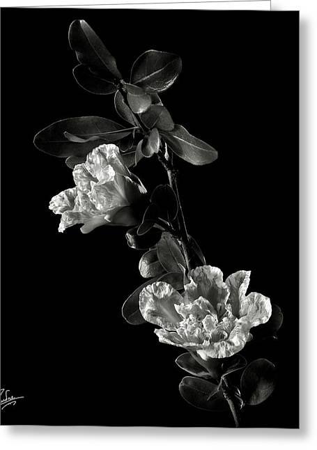 Flower Photos Greeting Cards - Pomegranate Flowers in Black and White Greeting Card by Endre Balogh