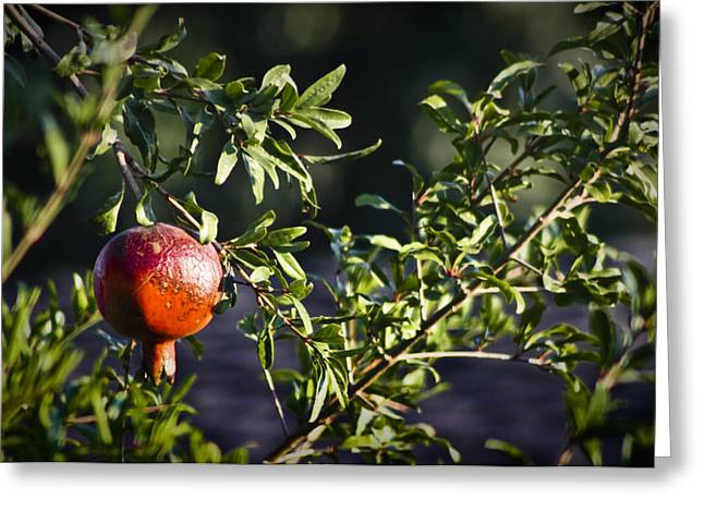 Green Foliage Greeting Cards - Pomegranate Greeting Card by Teresa Mucha