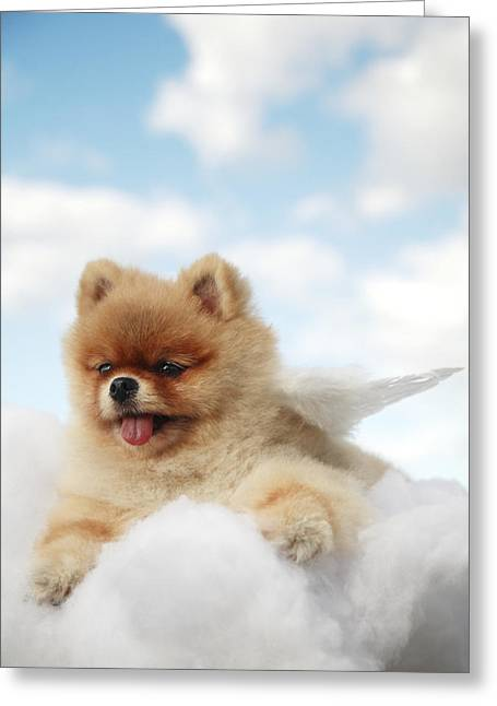 Pet Angels Greeting Cards - Pomeranian on Clouds Greeting Card by Brandon Tabiolo - Printscapes