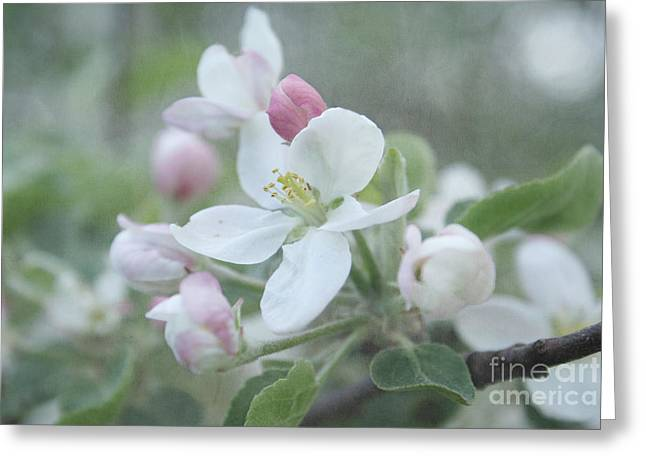 Apple Tree Greeting Cards - Pomme d Api 01 - s01bt01b Greeting Card by Variance Collections