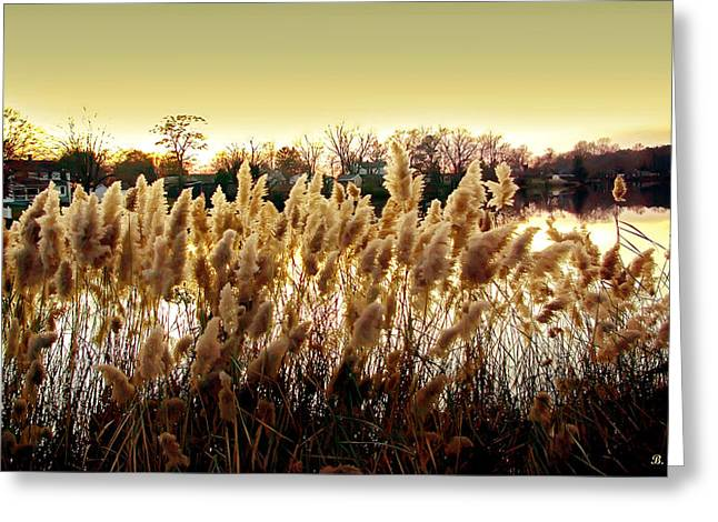 Pond Grasses Greeting Card by Brian Wallace