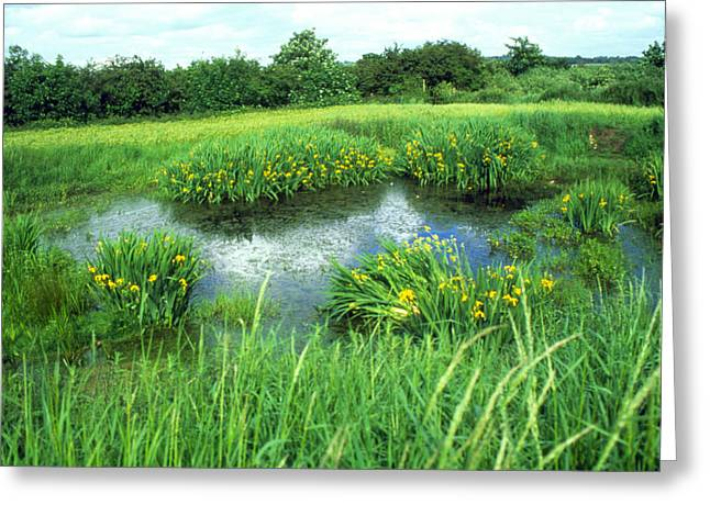 Pond Life Greeting Cards - Pond In Summer Greeting Card by Andy Harmer