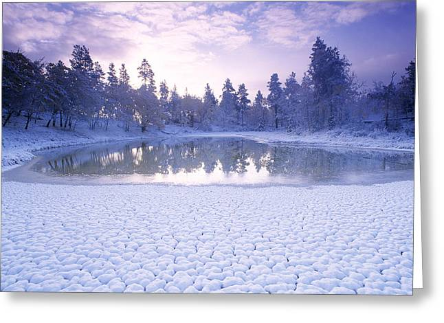 Pond Life Greeting Cards - Pond In Winter Greeting Card by David Nunuk