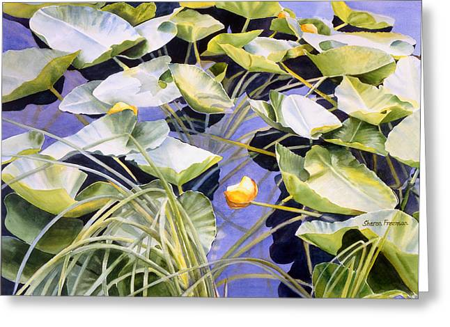 Pond Paintings Greeting Cards - Pond Lilies Greeting Card by Sharon Freeman