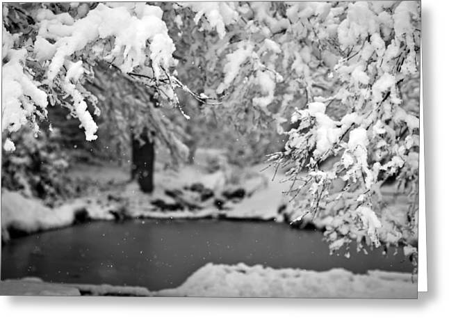 Pond Mystere Greeting Card by Mike Reid