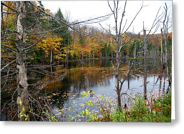 Fir Trees Greeting Cards - Pond on Limekiln Road Greeting Card by David Patterson