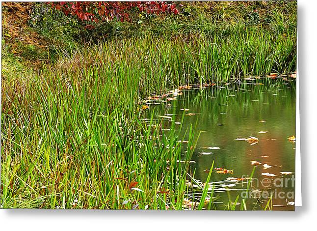 Pond Reflections Greeting Card by Thomas R Fletcher