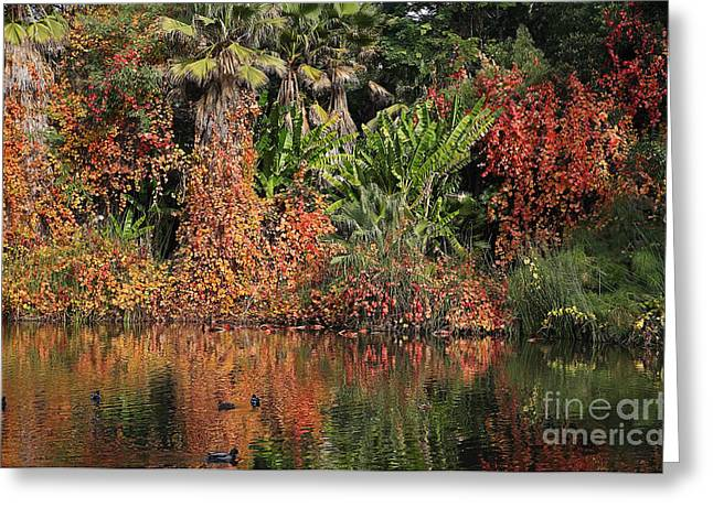 Golden Pond Greeting Cards - Pond with trees in the Fall or Autumn Greeting Card by Nicholas Burningham